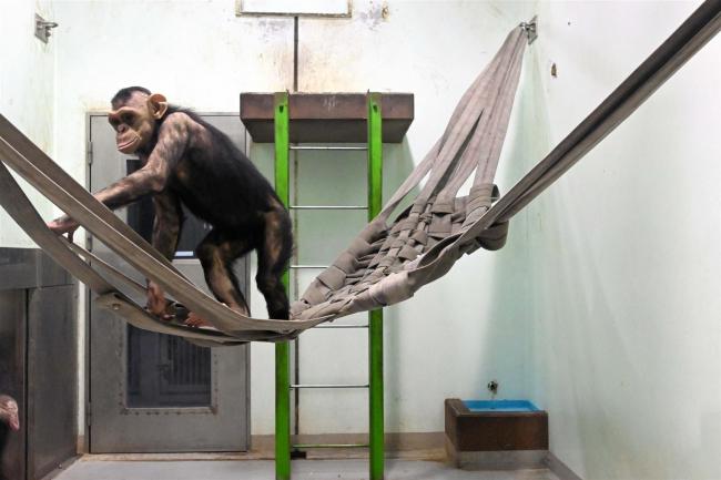 廃消防ホースが動物の遊具に 帯広消防署がおびひろ動物園に寄贈
