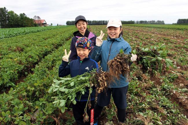親子で落花生収穫体験 芽室