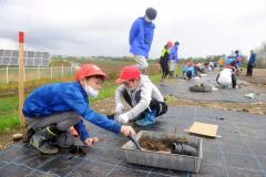 苗木を植える児童たち