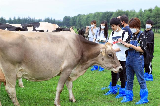 畜大サークル「酪農どうでしょう」 就農の後押しに