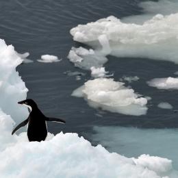 氷の上で羽を広げるアデリーペンギン
