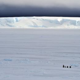氷山とアデリーペンギン