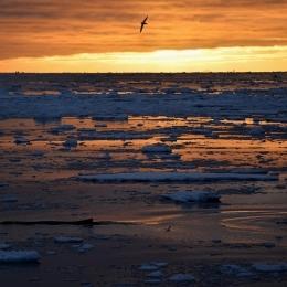 氷海を泳ぐクジラ