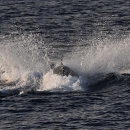 船の脇で悠然と泳ぐクジラ
