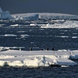流氷の上でたたずむコウテイペンギンとアデリーペンギン
