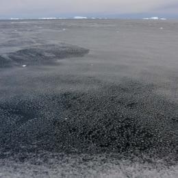 ハスの葉状の氷 (1)