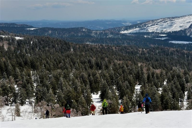 ルゥチシ峠を過ぎると、アカエゾマツが群生する「原始ケ原」へ。中央最奥が十勝との境界地点