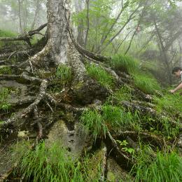 岩を包み込むように伸びた木の根
